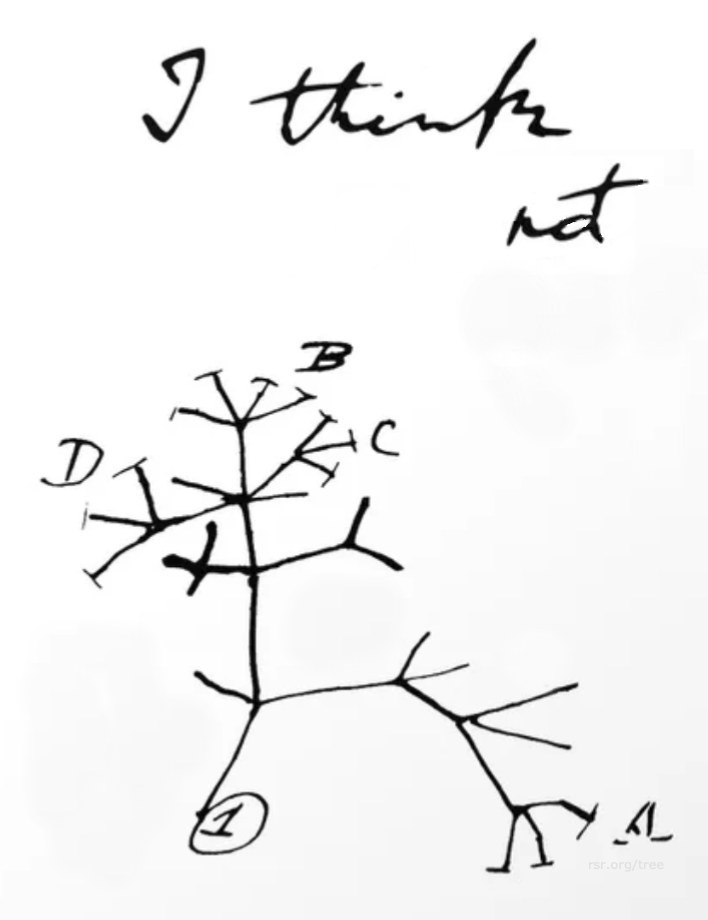 "Darwin's tree sketch with the word ""not"" added to his penciled ""I think"""