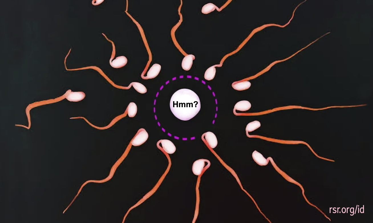 Research shows that the egg (ovum) attempts to select a sperm with good copies of its own corrupted genes