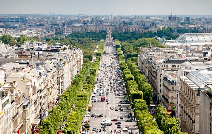Paris tree-lined street