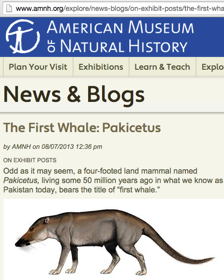 NYC's American Museum of Natural History exhibit -- First Whale: Pakicetus, full quadruped