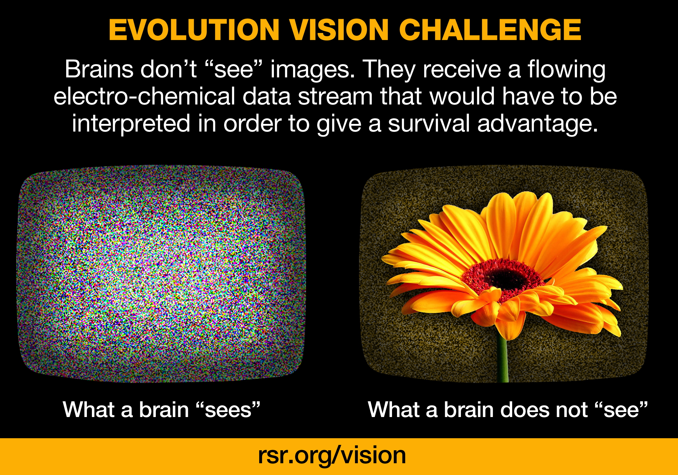 RSR vision challenge to any evolutionist...